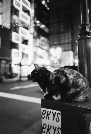 Tokyo006weblog