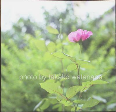 08sum016weblog